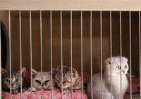 """看清楚什麼是後院貓!告訴你不能買""""後院貓""""的七大理由!"""