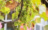 人均50+吃農家菜!藏在欖核附近的隱世農莊,是番禺人的後花園!